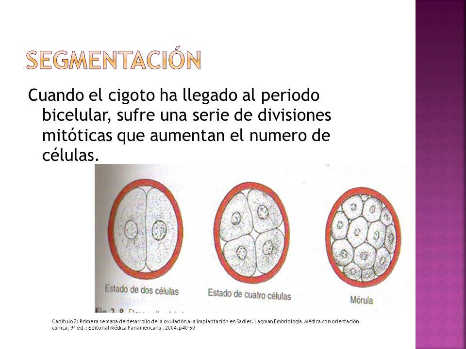 Cuando el cigoto ha llegado al periodo bicelular, sufre una serie de divisiones mitóticas que aumentan el numero de células. Capitulo 2: Primera seman