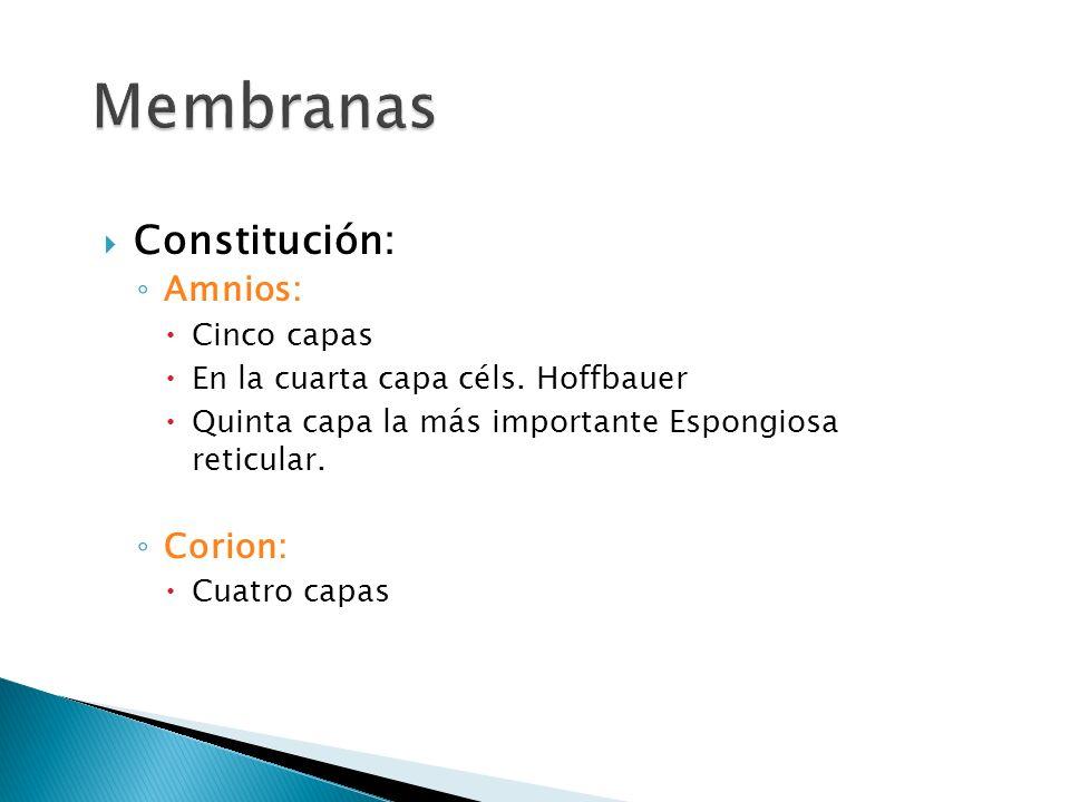 Constitución: Amnios: Cinco capas En la cuarta capa céls.