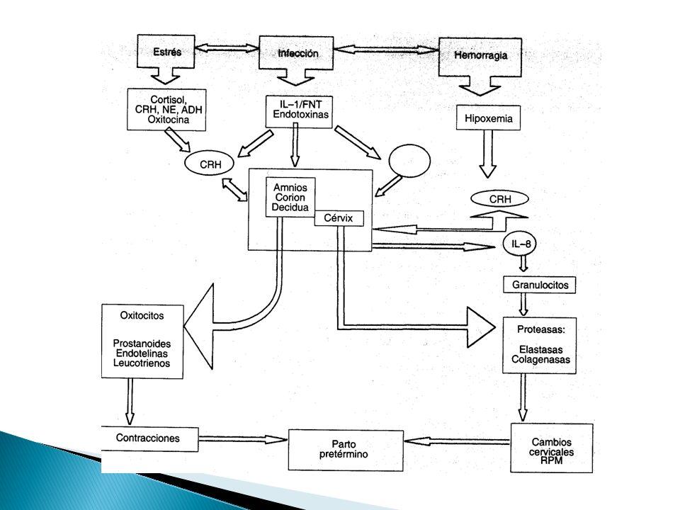 Embarazo a término sin corioamnionitis 37 SDG RPM sin aminionitis Tx expectante 6-12 hrs Activo inducción de trabajo de parto oxitocina