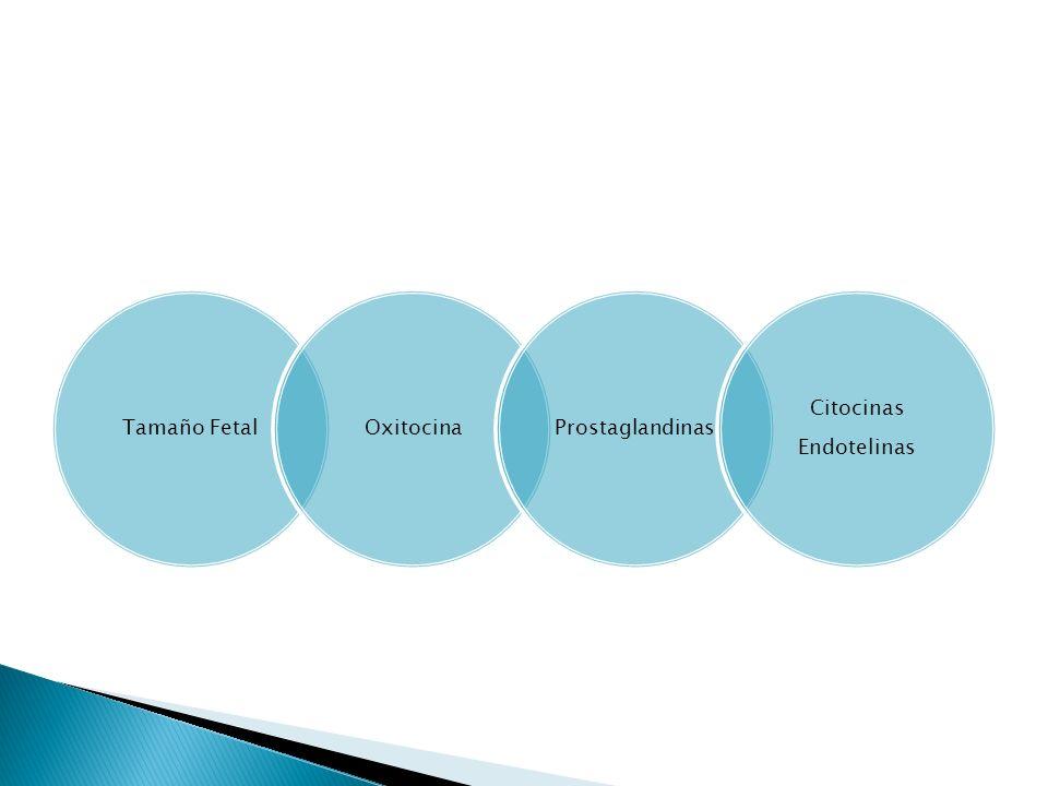 Tamaño FetalOxitocinaProstaglandinas Citocinas Endotelinas