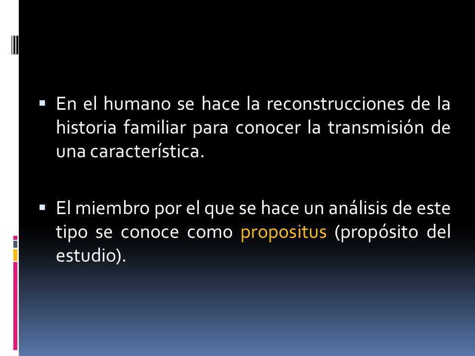 En el humano se hace la reconstrucciones de la historia familiar para conocer la transmisión de una característica. El miembro por el que se hace un a