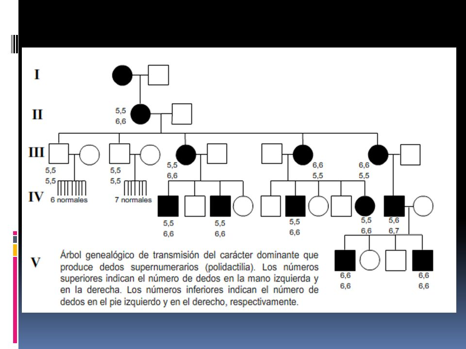 Herencia mendeliana en el hombre Entre los humanos los apareamientos muestran patrones de transmisión de características que se heredan medelianamente.