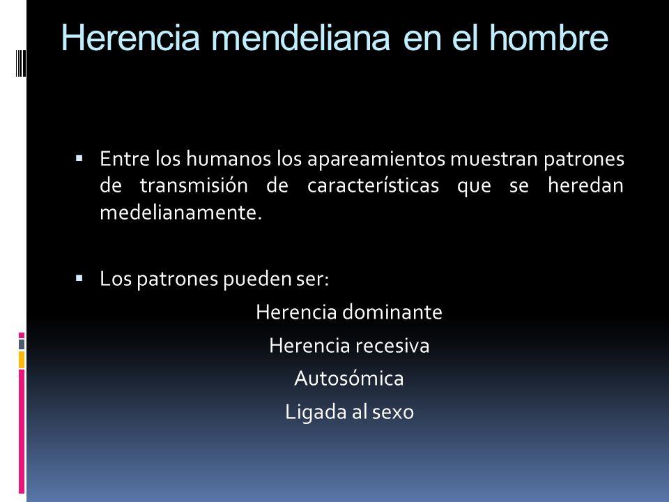 Herencia mendeliana en el hombre Entre los humanos los apareamientos muestran patrones de transmisión de características que se heredan medelianamente