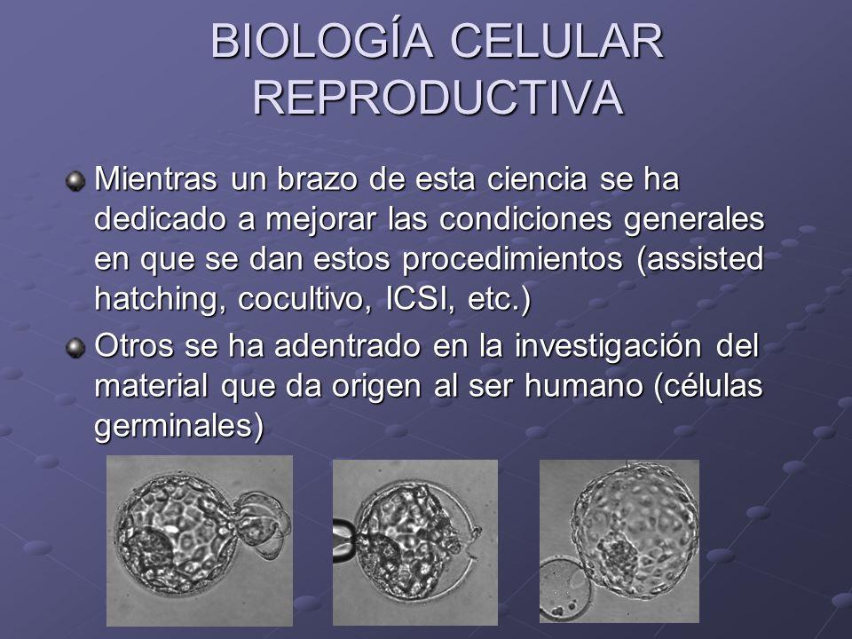 BIOLOGÍA CELULAR REPRODUCTIVA Mientras un brazo de esta ciencia se ha dedicado a mejorar las condiciones generales en que se dan estos procedimientos
