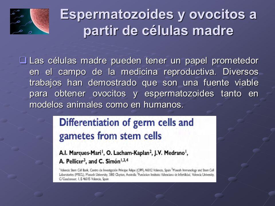Espermatozoides y ovocitos a partir de células madre Las células madre pueden tener un papel prometedor en el campo de la medicina reproductiva. Diver