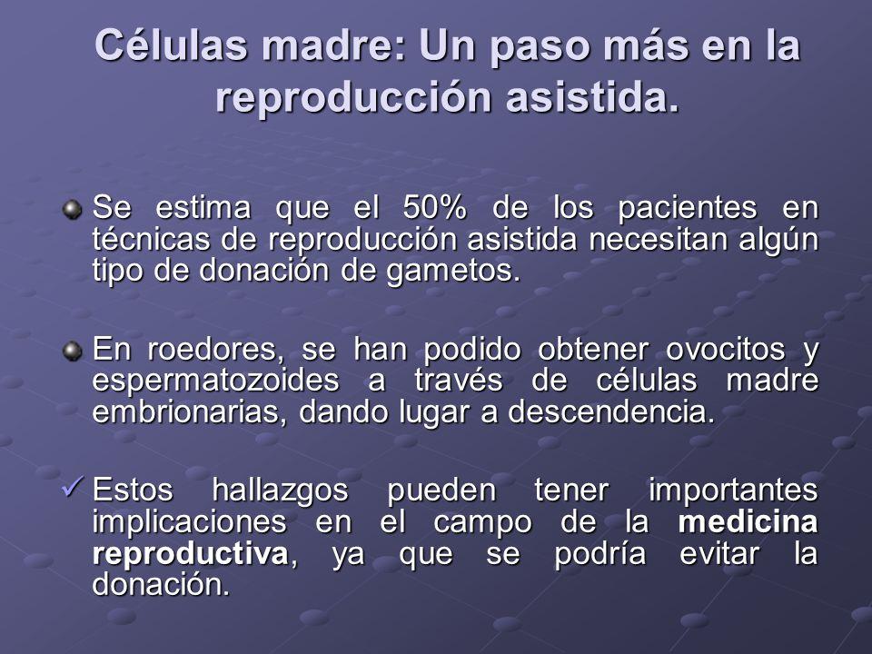 Células madre: Un paso más en la reproducción asistida. Se estima que el 50% de los pacientes en técnicas de reproducción asistida necesitan algún tip