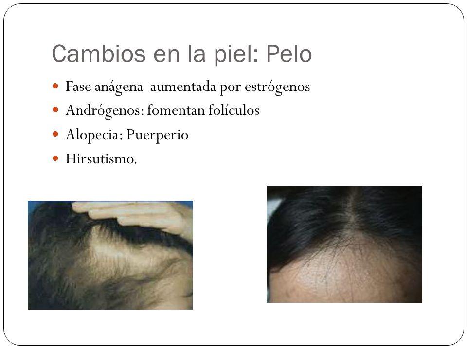 Cambios en la piel: Pelo Fase anágena aumentada por estrógenos Andrógenos: fomentan folículos Alopecia: Puerperio Hirsutismo.