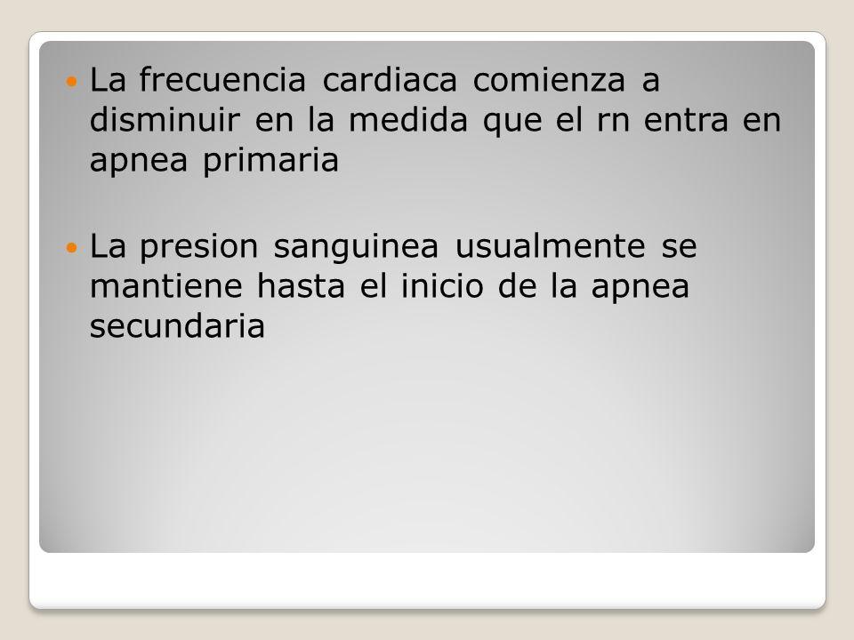 La frecuencia cardiaca comienza a disminuir en la medida que el rn entra en apnea primaria La presion sanguinea usualmente se mantiene hasta el inicio