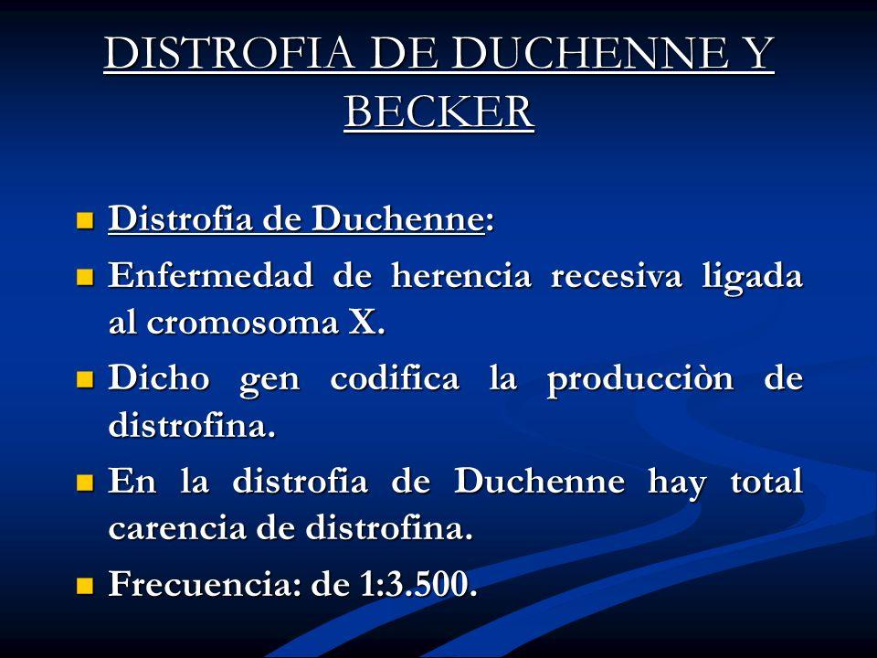 DISTROFIA DE DUCHENNE Y BECKER Distrofia de Duchenne: Distrofia de Duchenne: Enfermedad de herencia recesiva ligada al cromosoma X. Enfermedad de here
