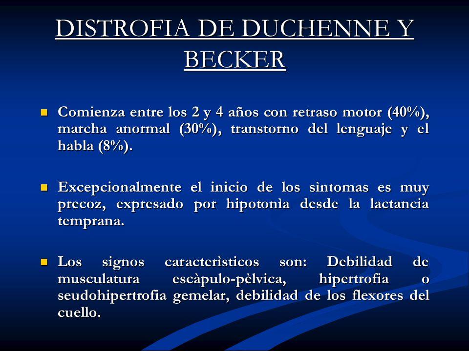 DISTROFIA DE DUCHENNE Y BECKER Comienza entre los 2 y 4 años con retraso motor (40%), marcha anormal (30%), transtorno del lenguaje y el habla (8%). C