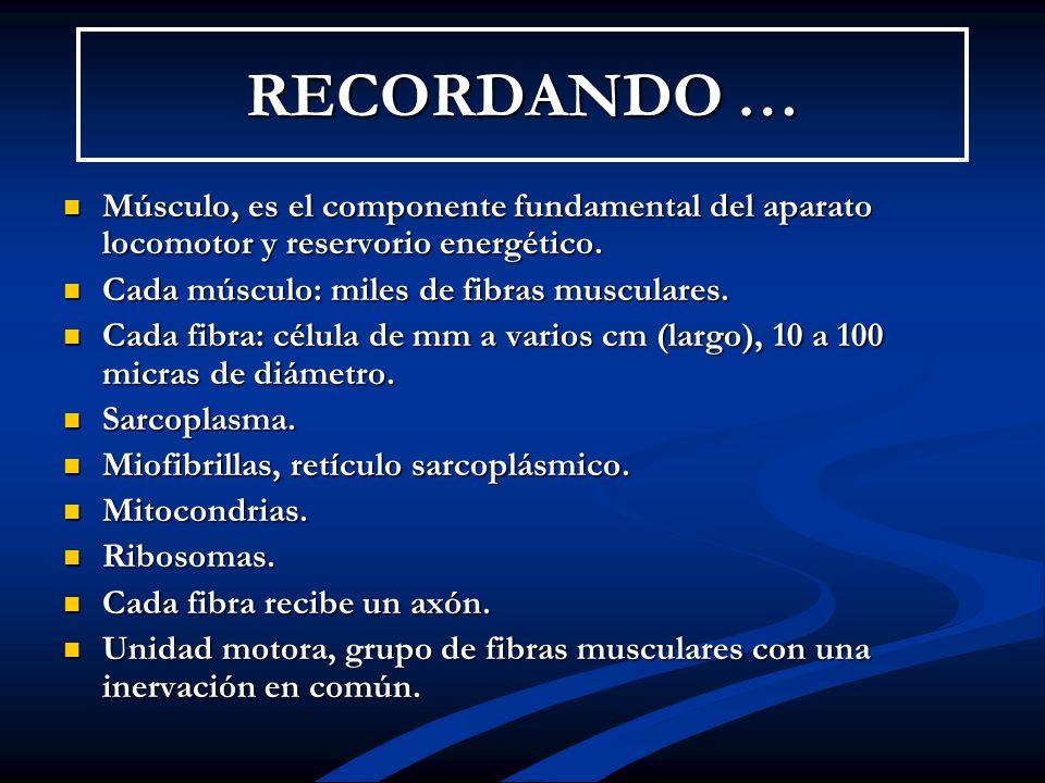 RECORDANDO … Músculo, es el componente fundamental del aparato locomotor y reservorio energético. Músculo, es el componente fundamental del aparato lo