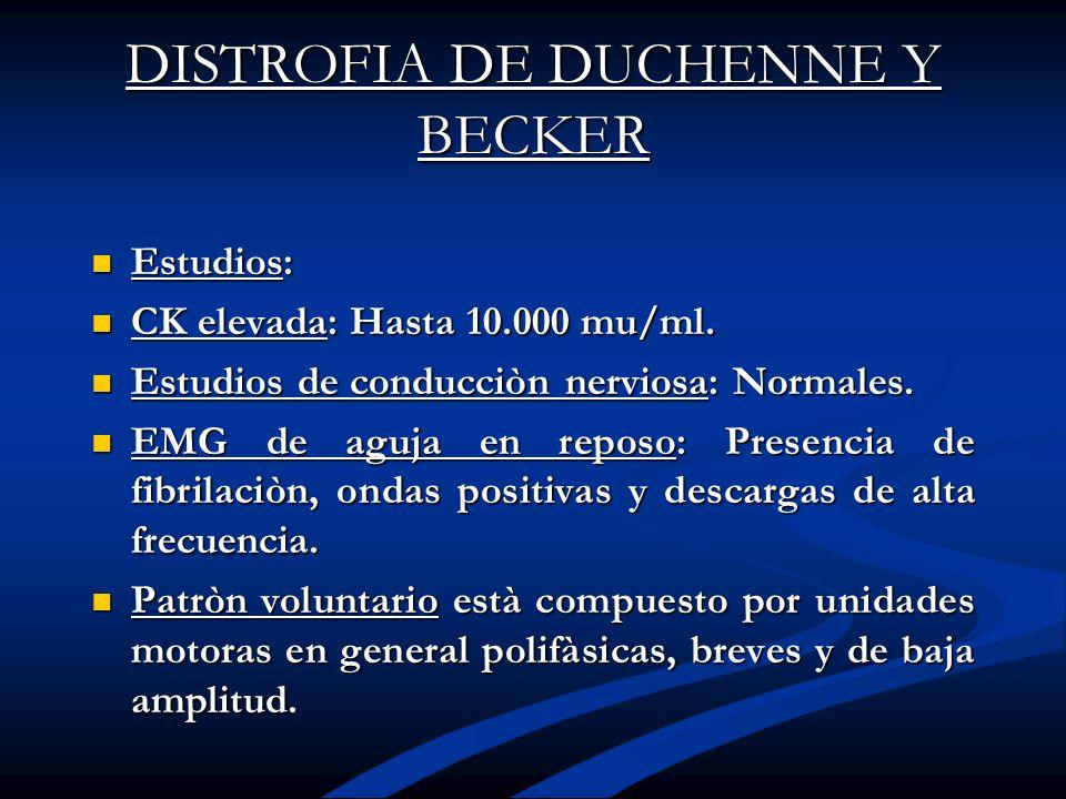 DISTROFIA DE DUCHENNE Y BECKER Estudios: Estudios: CK elevada: Hasta 10.000 mu/ml. CK elevada: Hasta 10.000 mu/ml. Estudios de conducciòn nerviosa: No