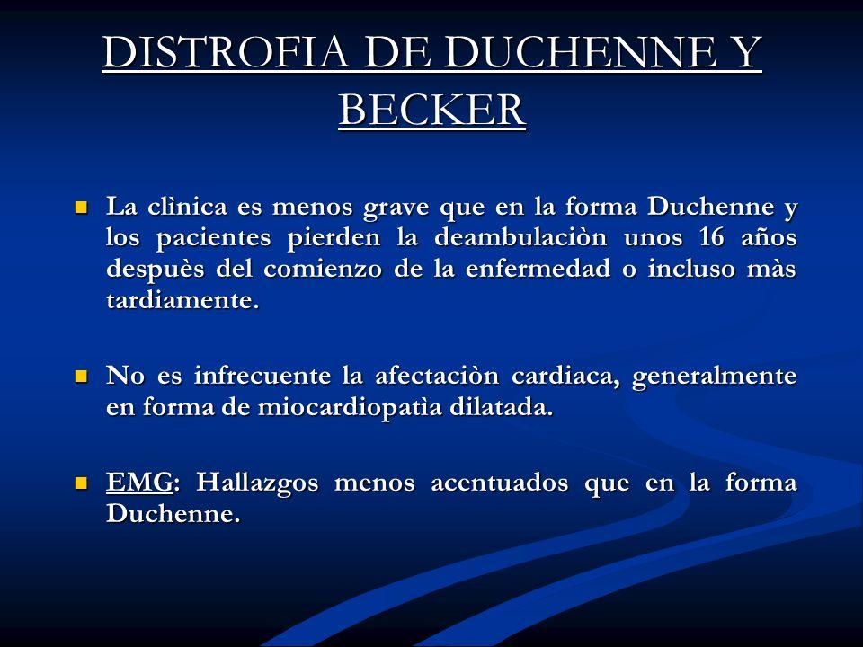 DISTROFIA DE DUCHENNE Y BECKER La clìnica es menos grave que en la forma Duchenne y los pacientes pierden la deambulaciòn unos 16 años despuès del com