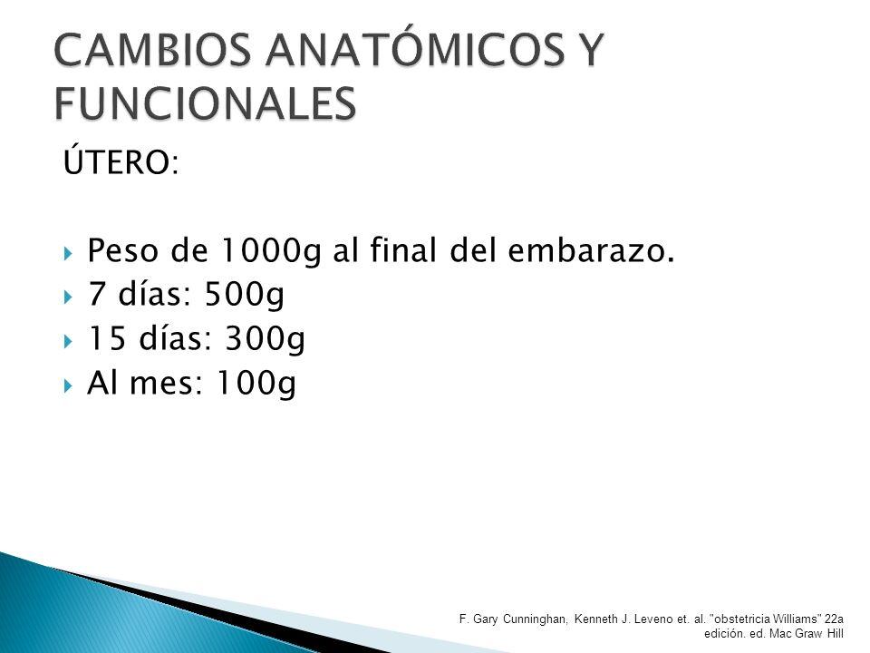 ÚTERO: Peso de 1000g al final del embarazo. 7 días: 500g 15 días: 300g Al mes: 100g F. Gary Cunninghan, Kenneth J. Leveno et. al.