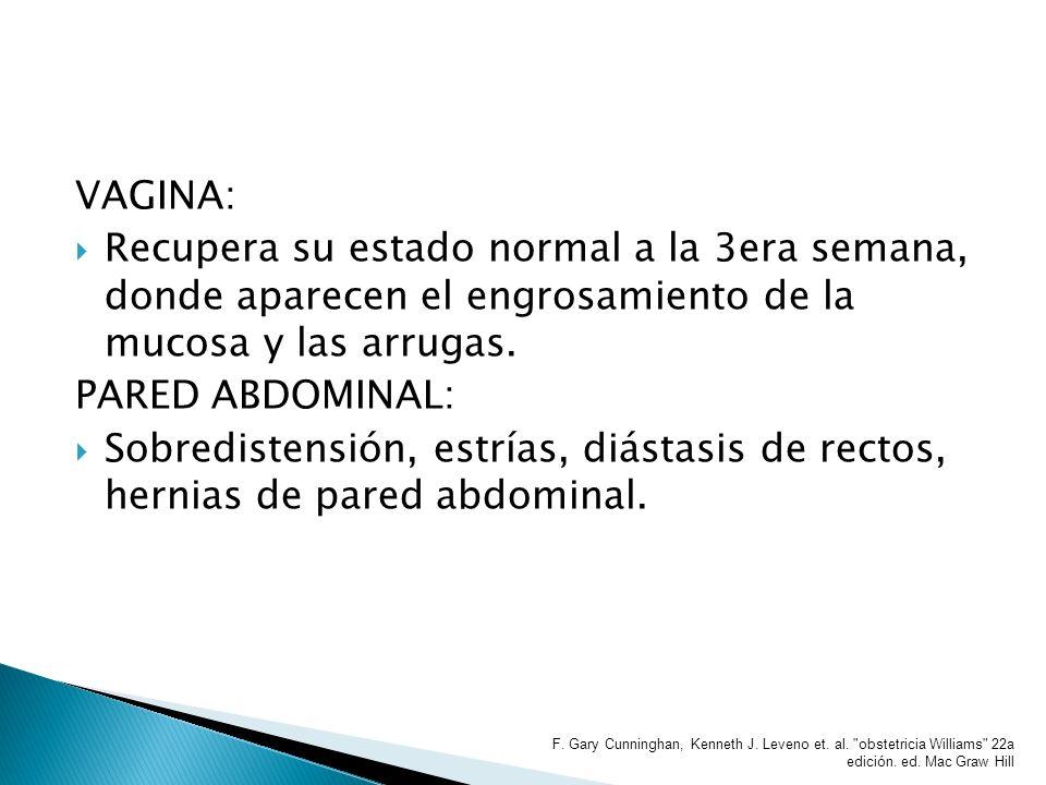 VAGINA: Recupera su estado normal a la 3era semana, donde aparecen el engrosamiento de la mucosa y las arrugas. PARED ABDOMINAL: Sobredistensión, estr