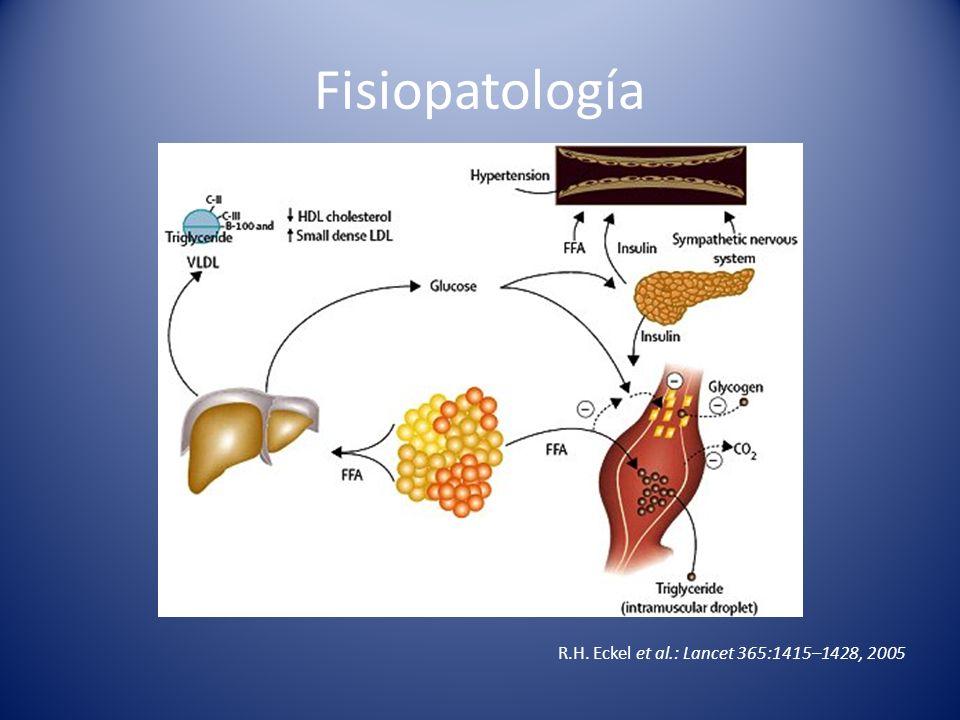 Fisiopatología R.H. Eckel et al.: Lancet 365:1415–1428, 2005
