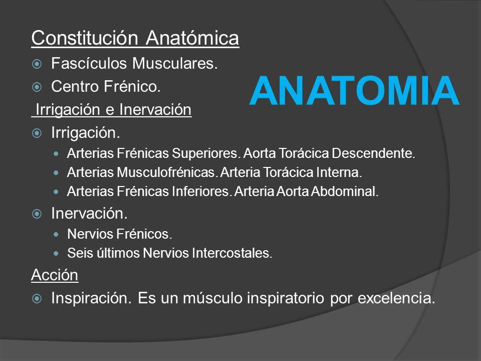 Constitución Anatómica Fascículos Musculares. Centro Frénico. Irrigación e Inervación Irrigación. Arterias Frénicas Superiores. Aorta Torácica Descend