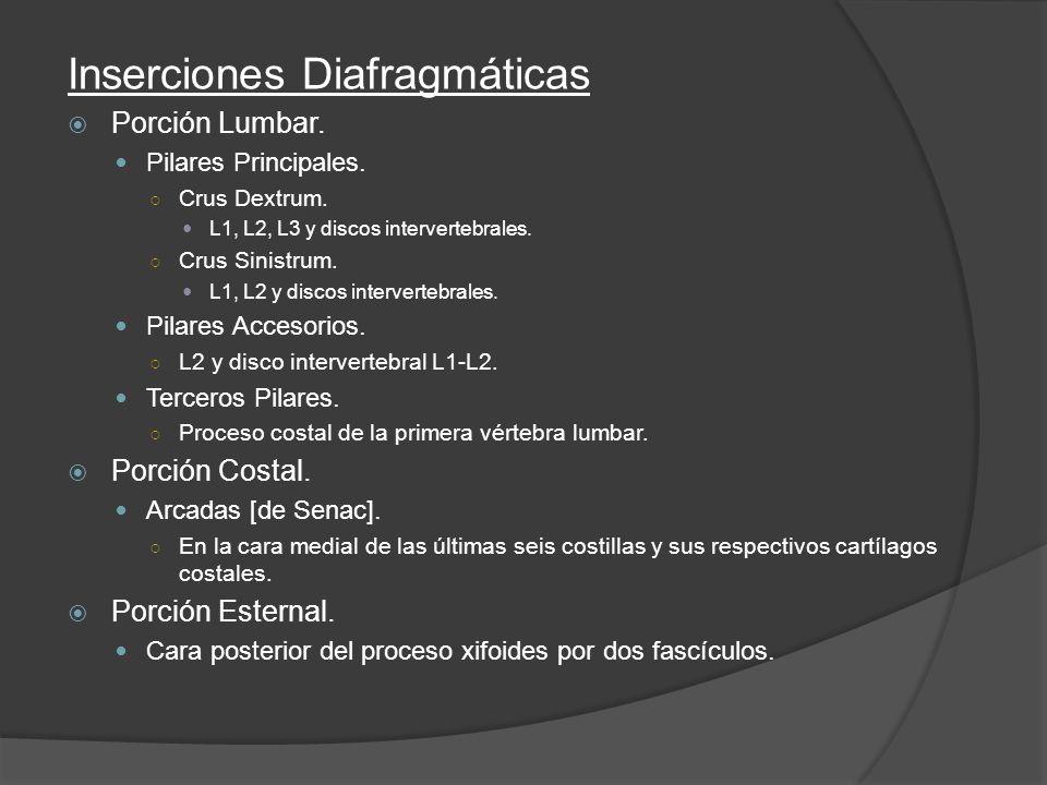 Inserciones Diafragmáticas Porción Lumbar. Pilares Principales. Crus Dextrum. L1, L2, L3 y discos intervertebrales. Crus Sinistrum. L1, L2 y discos in