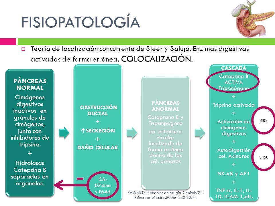 FISIOPATOLOGÍA Teoría de localización concurrente de Steer y Saluja. Enzimas digestivas activadas de forma errónea. COLOCALIZACIÓN. PÁNCREAS NORMAL Ci