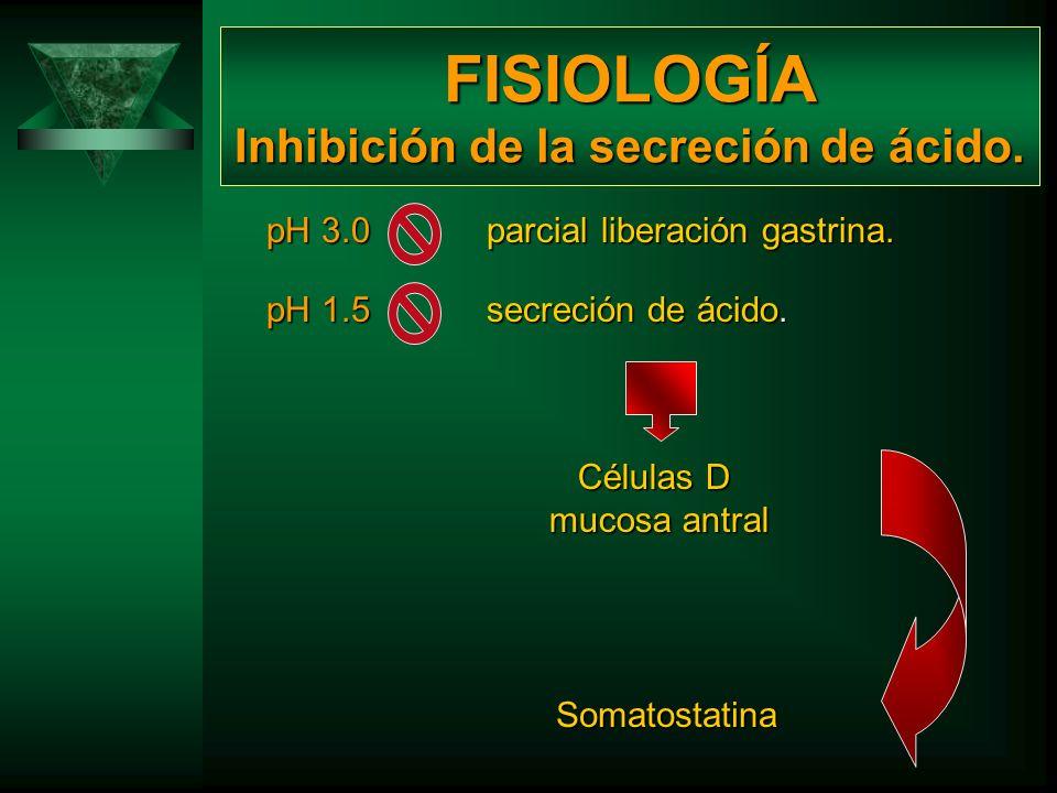 FISIOLOGÍA MASTOCITOS Histamina Aumento de la actividad del AMPc en células parietales Secreción ácida del estómago Actúa en combinación con la gastri