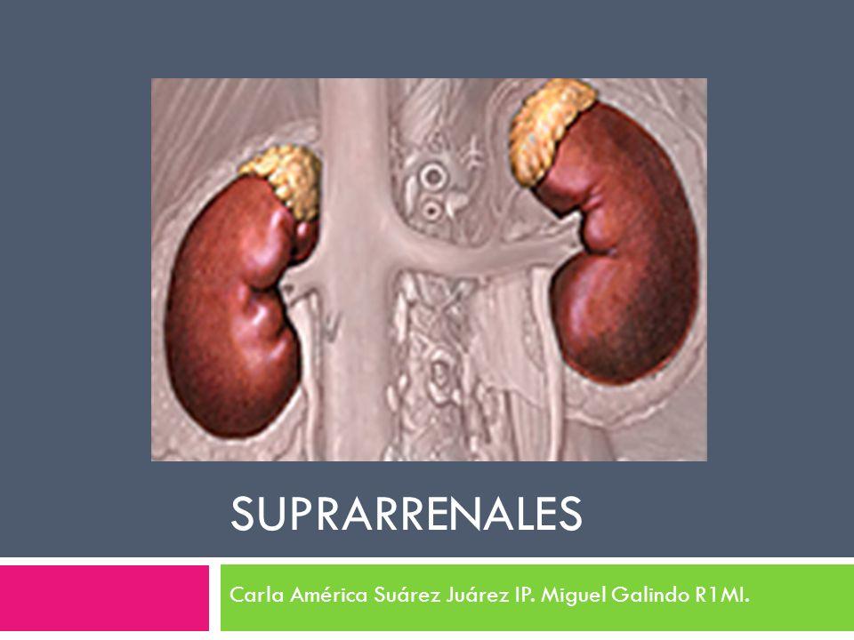SUPRARRENALES Carla América Suárez Juárez IP. Miguel Galindo R1MI.