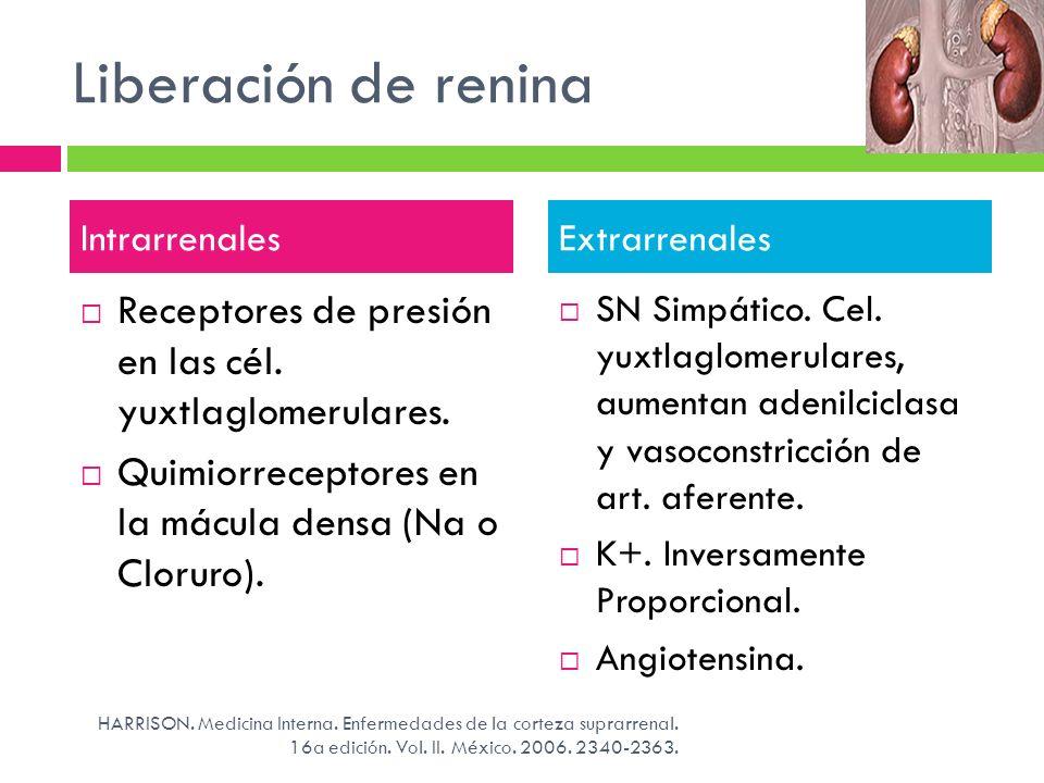 Liberación de renina Receptores de presión en las cél. yuxtlaglomerulares. Quimiorreceptores en la mácula densa (Na o Cloruro). SN Simpático. Cel. yux