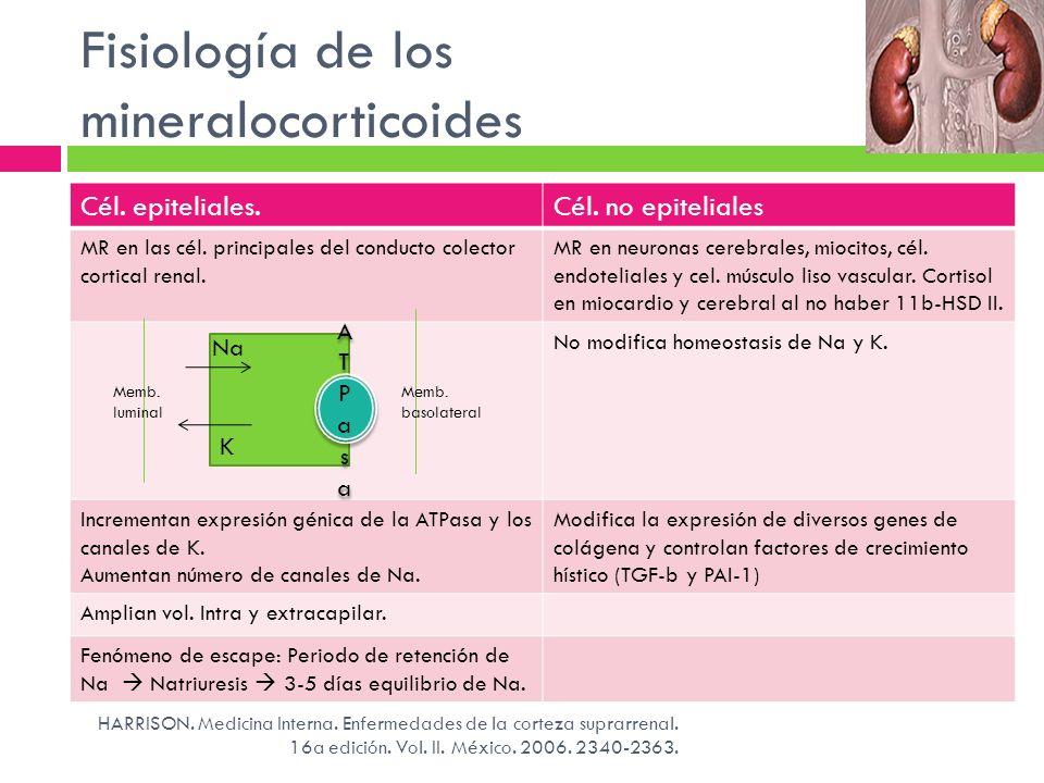 Fisiología de los mineralocorticoides Cél. epiteliales.Cél. no epiteliales MR en las cél. principales del conducto colector cortical renal. MR en neur