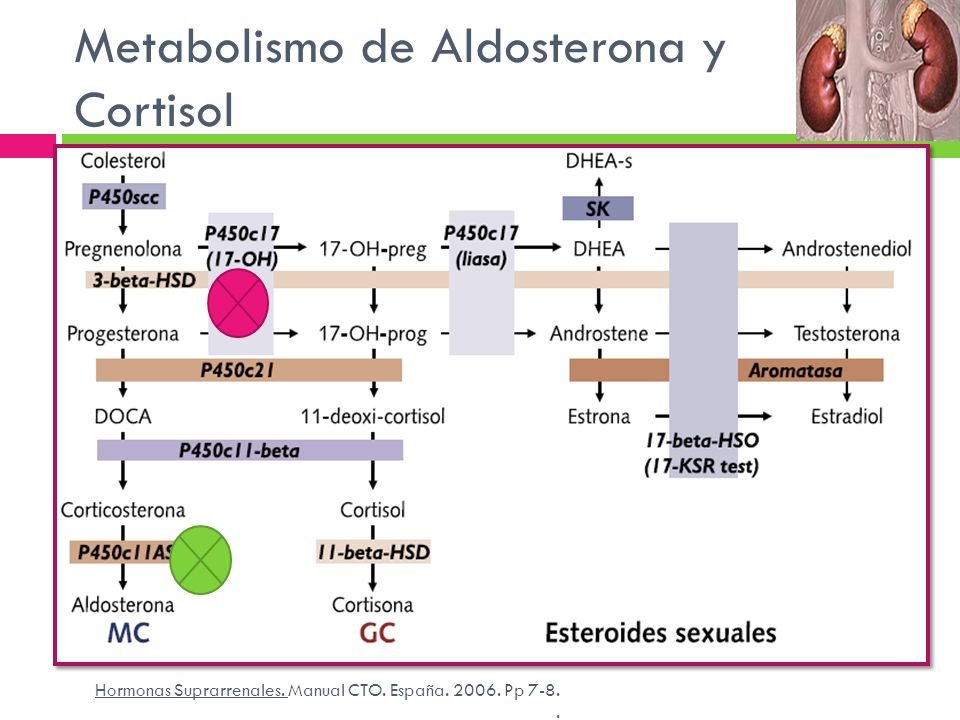 Metabolismo de Aldosterona y Cortisol Hormonas Suprarrenales. Manual CTO. España. 2006. Pp 7-8..