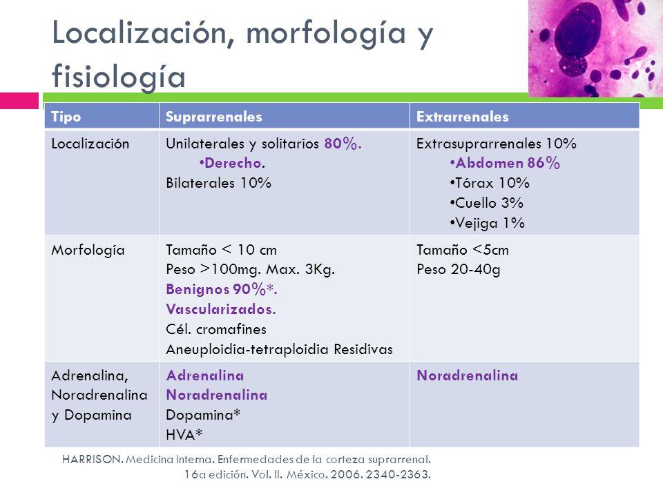 Localización, morfología y fisiología HARRISON. Medicina Interna. Enfermedades de la corteza suprarrenal. 16a edición. Vol. II. México. 2006. 2340-236