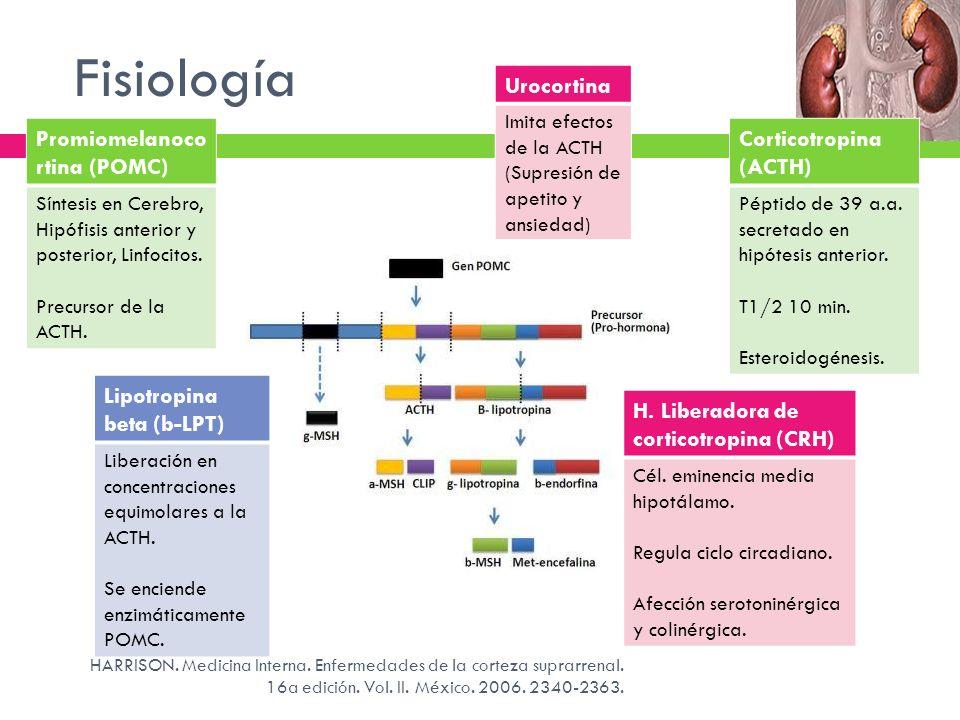 Fisiología Factores estimulantes de la ACTH Factores inhibidores de la ACTH CRH* AVP* Cortisol libre Ciclo sueño- vigilia Estrés Comida *Citocinas inflamatorias (FNT, IL-1 y 6) Dosis altas de glucocorticoides 1.Disminuyen capacidad de reacción de la cél.