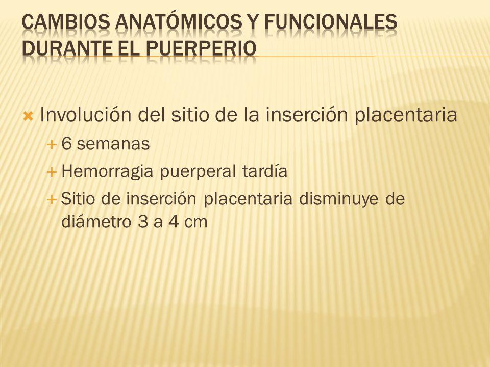 Involución del sitio de la inserción placentaria 6 semanas Hemorragia puerperal tardía Sitio de inserción placentaria disminuye de diámetro 3 a 4 cm