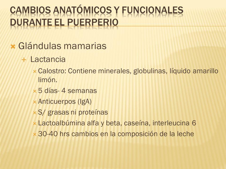Glándulas mamarias Lactancia Calostro: Contiene minerales, globulinas, líquido amarillo limón. 5 días- 4 semanas Anticuerpos (IgA) S/ grasas ni proteí