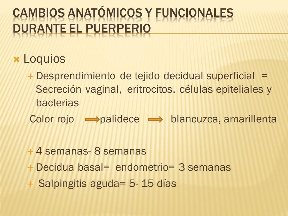 Subinvolución Detiene o retarda la involución útero puerperal (proporciones originales).