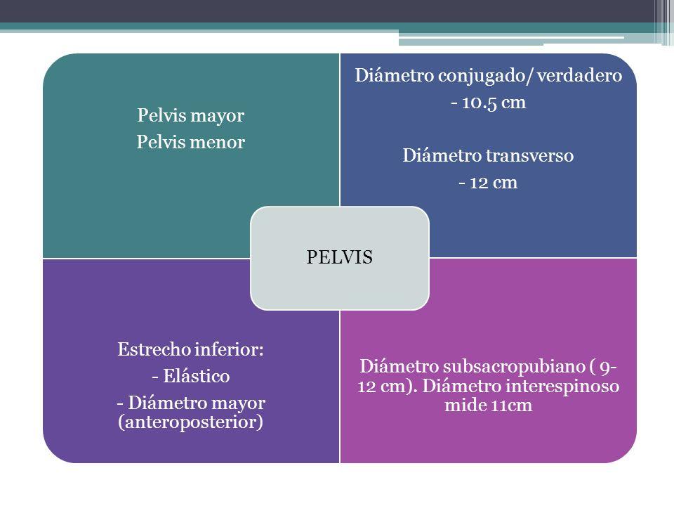 Pelvis ósea Pelvis mayor Pelvis menor Diámetro conjugado obstétrico Mide 10.5 cm Promontorio al punto + posterior del pubis Diámetro transverso 12 cm