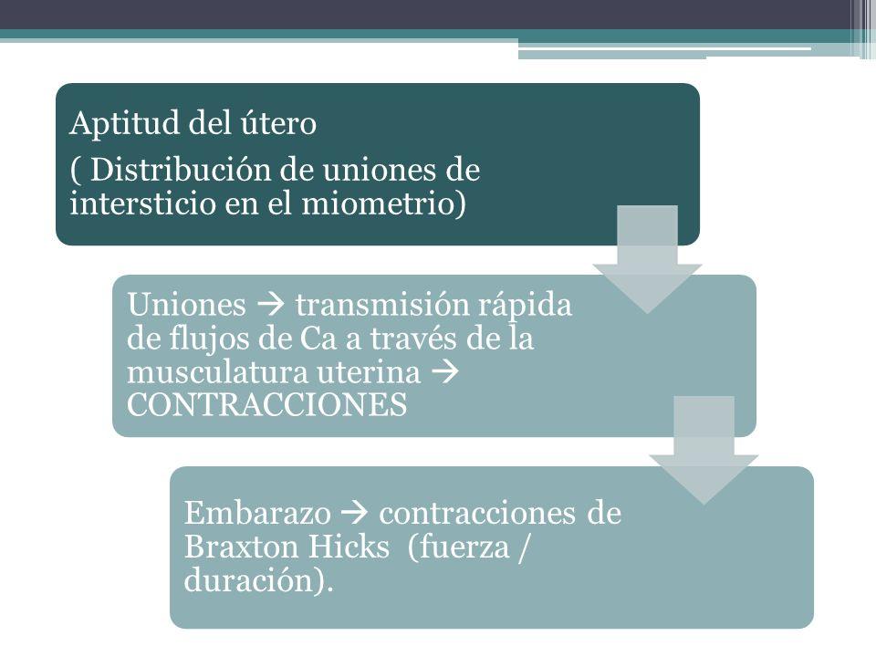 Aptitud del útero ( Distribución de uniones de intersticio en el miometrio) Uniones transmisión rápida de flujos de Ca a través de la musculatura uter