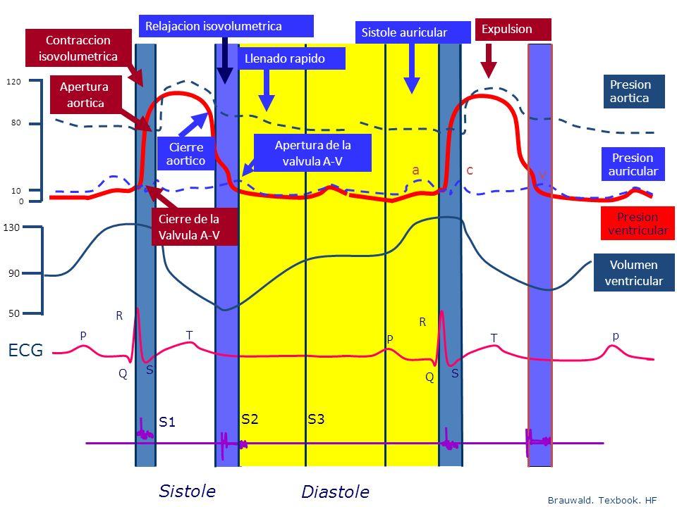 Brauwald. Texbook. HF Presion ventricular T P Q S ECG Presion aortica Presion auricular S1 S2S3 Diastole Sistole p T P Q S R R Apertura de la valvula