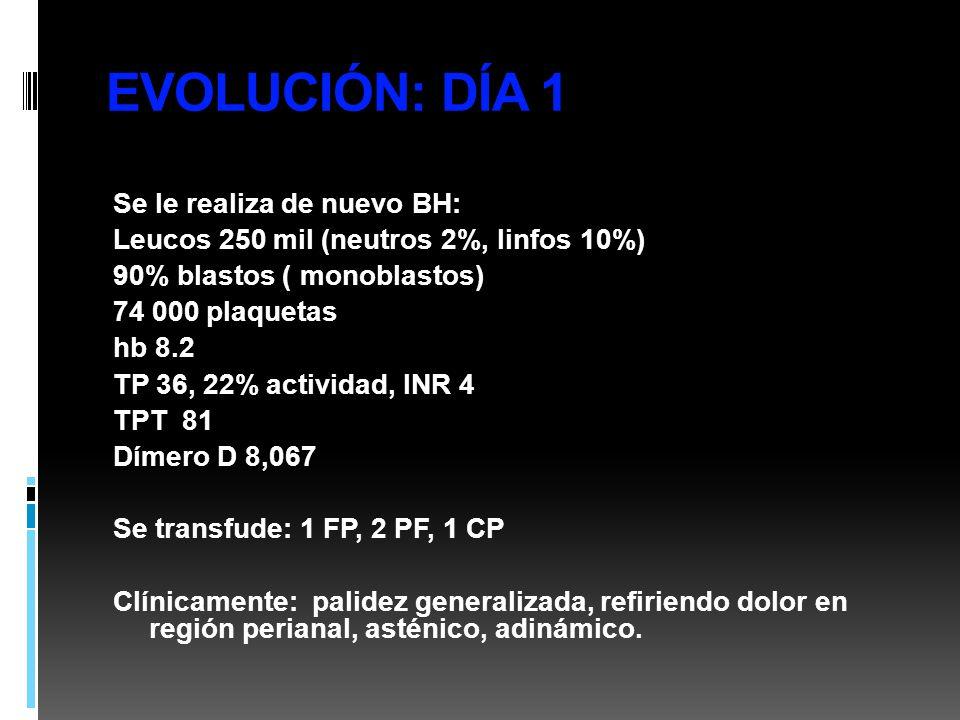 EVOLUCIÓN: DÍA 1 Se le realiza de nuevo BH: Leucos 250 mil (neutros 2%, linfos 10%) 90% blastos ( monoblastos) 74 000 plaquetas hb 8.2 TP 36, 22% acti