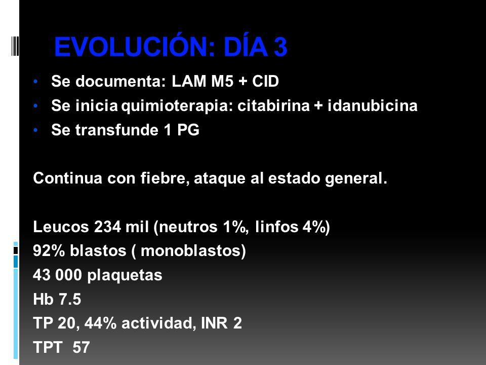 EVOLUCIÓN: DÍA 3 Se documenta: LAM M5 + CID Se inicia quimioterapia: citabirina + idanubicina Se transfunde 1 PG Continua con fiebre, ataque al estado