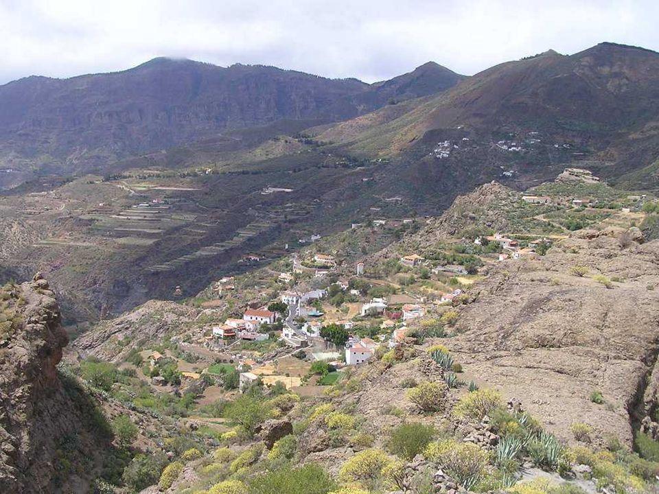 LOS TILOS DE MOYA