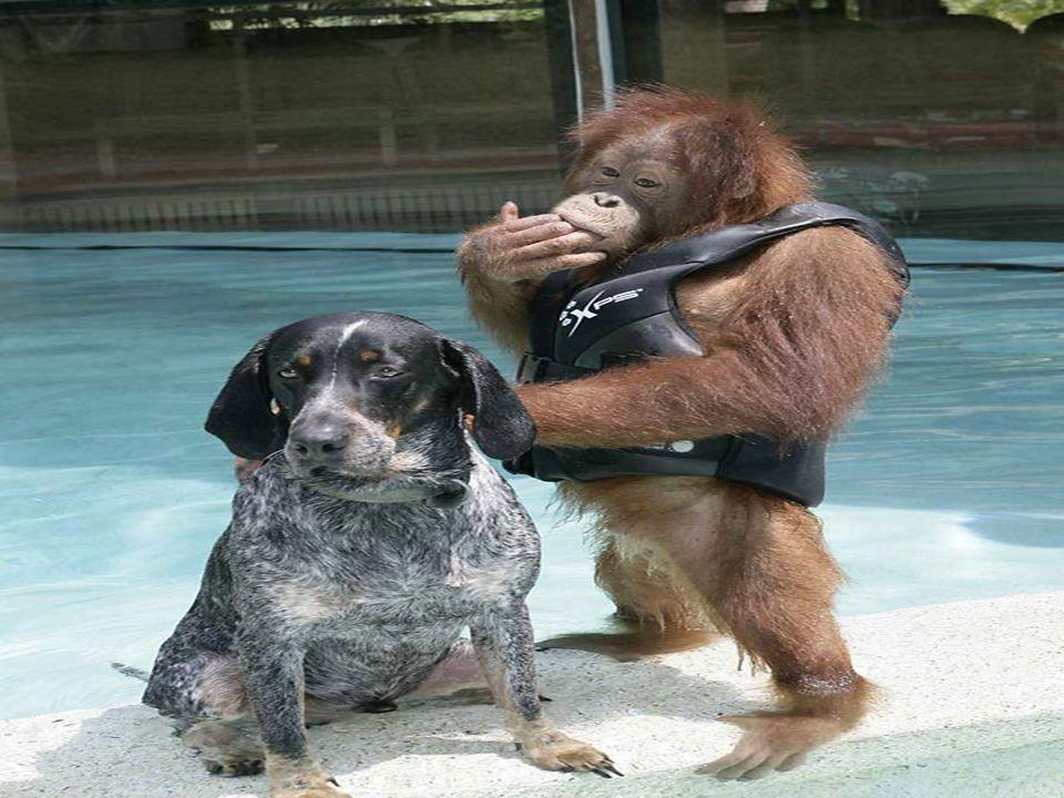 Encontraron más que un hombro amigo donde apoyarse...