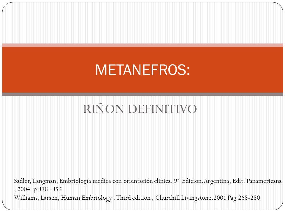RIÑON DEFINITIVO METANEFROS: Sadler, Langman, Embriología medica con orientación clínica. 9ª Edicion.Argentina, Edit. Panamericana, 2004 p 338 -355 Wi
