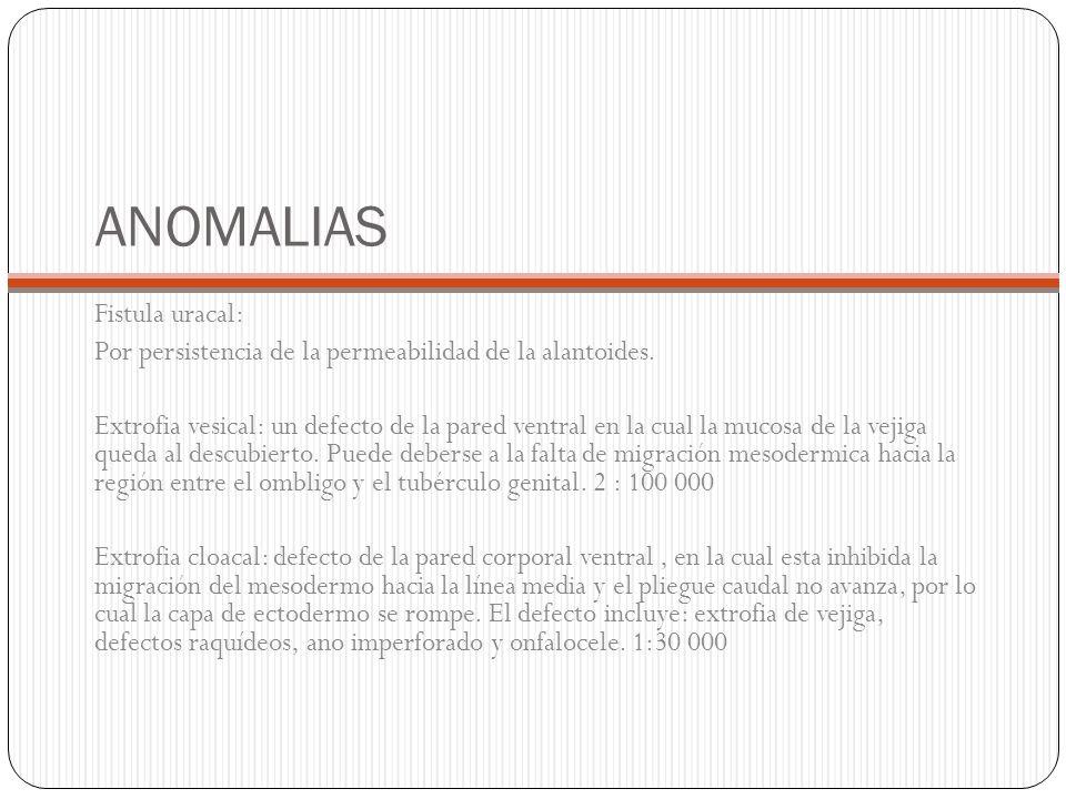 ANOMALIAS Fistula uracal: Por persistencia de la permeabilidad de la alantoides. Extrofia vesical: un defecto de la pared ventral en la cual la mucosa