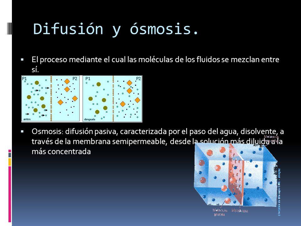 Difusión y ósmosis. El proceso mediante el cual las moléculas de los fluidos se mezclan entre sí. Osmosis: difusión pasiva, caracterizada por el paso