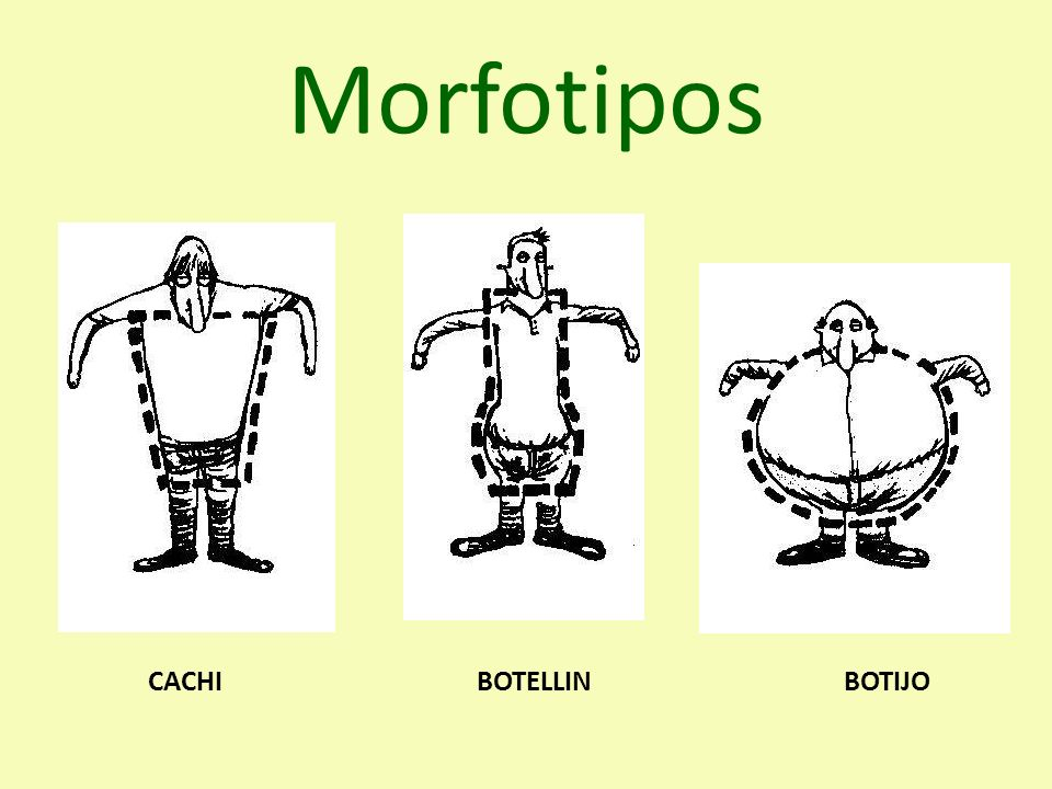 Morfotipos CACHIBOTELLINBOTIJO