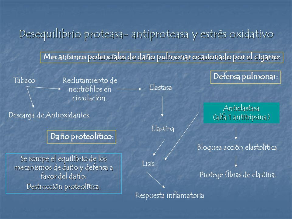 Desequilibrio proteasa- antiproteasa y estrés oxidativo Tabaco potenciales de daño pulmonar ocasionado por el cigarro: Mecanismos potenciales de daño