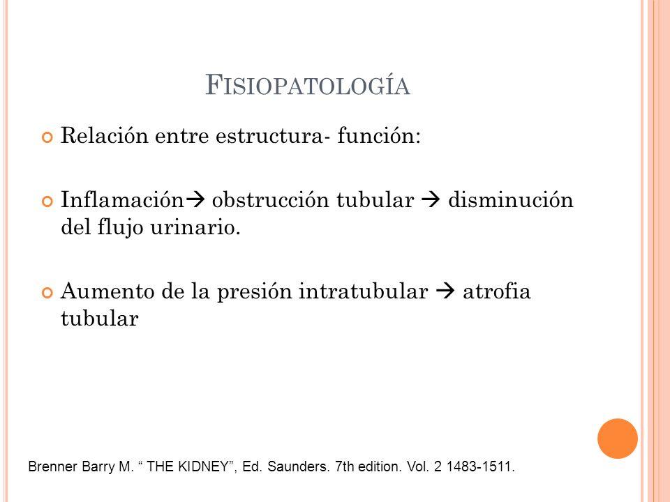 F ISIOPATOLOGÍA Relación entre estructura- función: Inflamación obstrucción tubular disminución del flujo urinario. Aumento de la presión intratubular