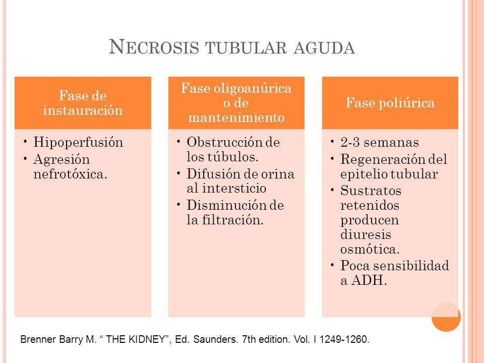 N ECROSIS TUBULAR AGUDA Fase de instauración Hipoperfusión Agresión nefrotóxica. Fase oligoanúrica o de mantenimiento Obstrucción de los túbulos. Difu