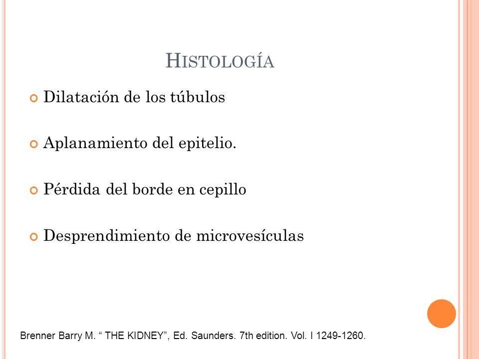 H ISTOLOGÍA Dilatación de los túbulos Aplanamiento del epitelio. Pérdida del borde en cepillo Desprendimiento de microvesículas Brenner Barry M. THE K