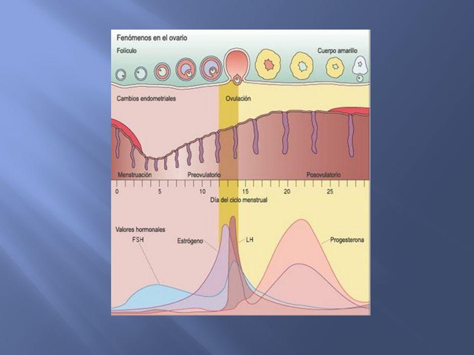 Hemorragia uterina anormal que no hace referencia a la intensidad de la pérdida ni guarda relación con el ciclo menstrual.