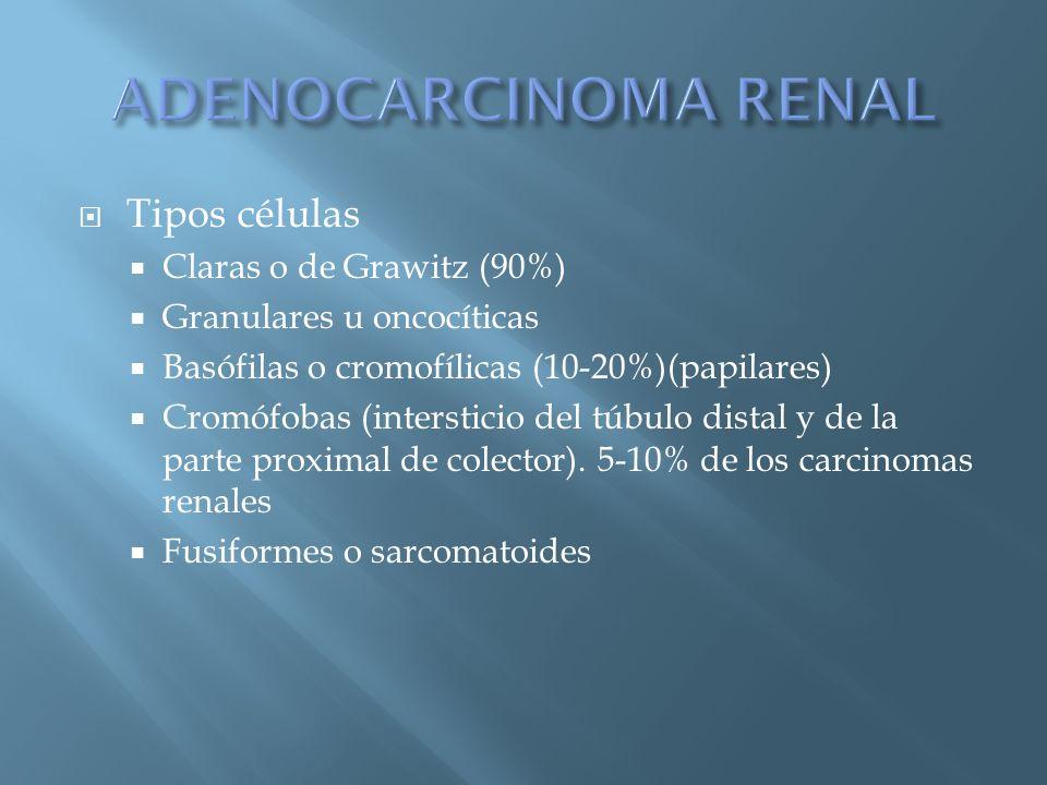 Tipos células Claras o de Grawitz (90%) Granulares u oncocíticas Basófilas o cromofílicas (10-20%)(papilares) Cromófobas (intersticio del túbulo dista